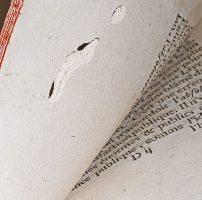 Insetti in archivi e biblioteche: i coleotteri